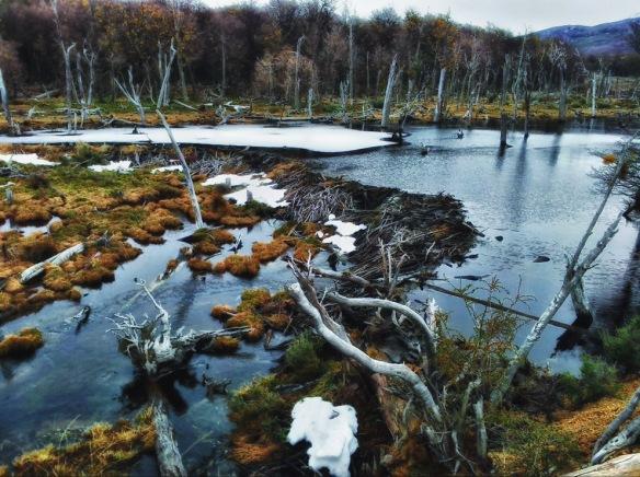ushuaia tierra del fuego beaver dam